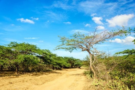 Dirt road running through an arid region in La Guajira, Colombia