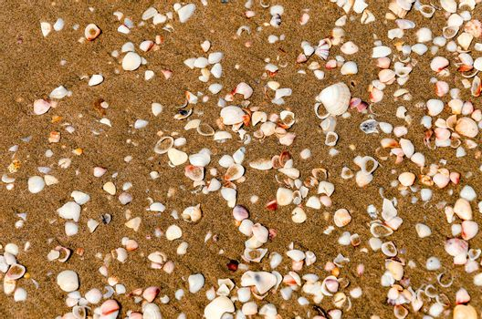 Seashells scattered on a Caribbean beach