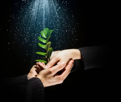 Green sprout in human hands. Recycle idea