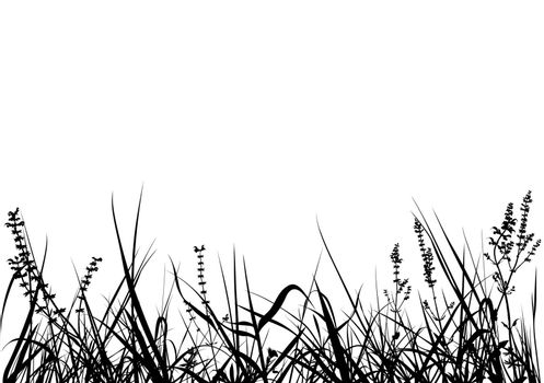 Grass - Black Detailed Silhouettes, Vector