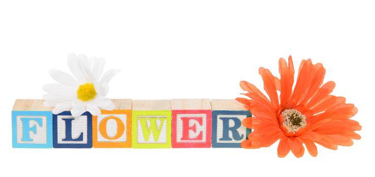 Letter blocks spelling flower. Isolated on white.