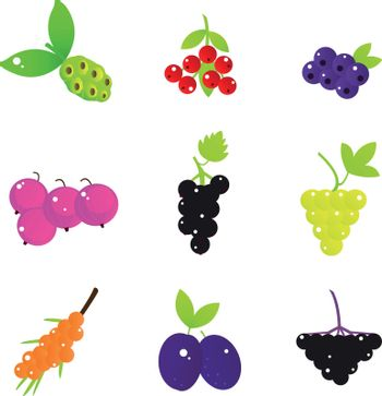 Fresh Fruit and Berries collection. Vector illustration