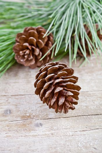 christmas fir tree with pinecones