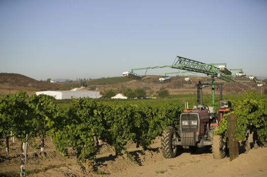 Agricultural tractor being used in a vineyard