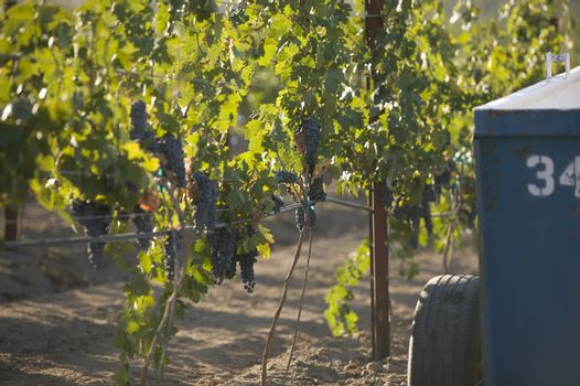 Cropped image of an agricultural tractor in a vineyard