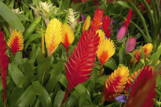 Closeup of beautiful flower plants at botanical garden