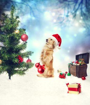Dachshund dog decorating christmas tree