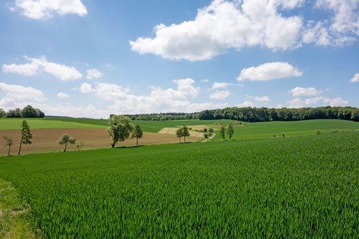 Field in the Kraichgau