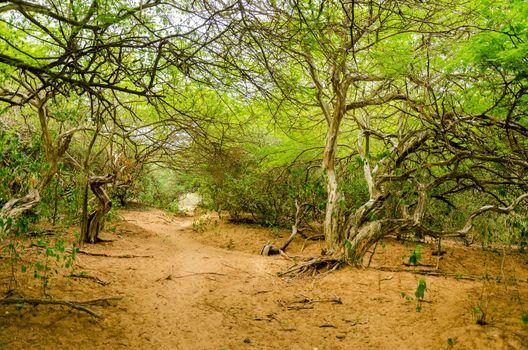 Path through a dry forest in La Guajira, Colombia
