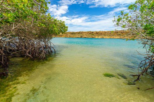 View of mangroves and coastline in La Guajira, Colombia