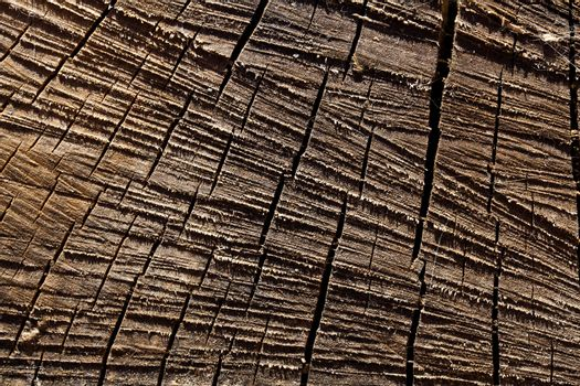 Macro sawed and dry wood texture with details