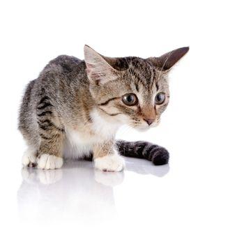 The frightened striped kitten l
