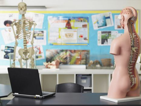 Laptop and anatomical model on desk in biology class