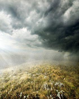 Rain in the field