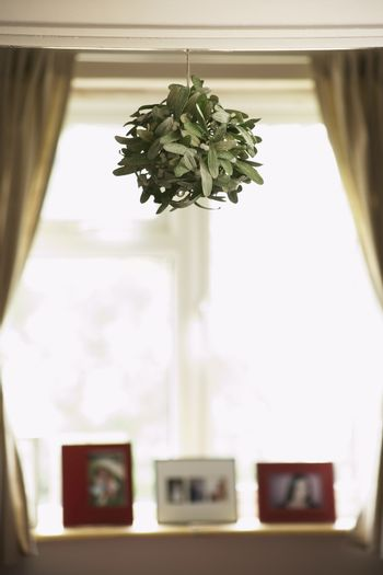 House plant hanging from ceiling