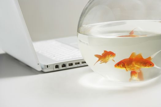 Laptop and goldfish in bowl on table