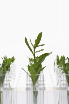 Plant seedlings in glasses