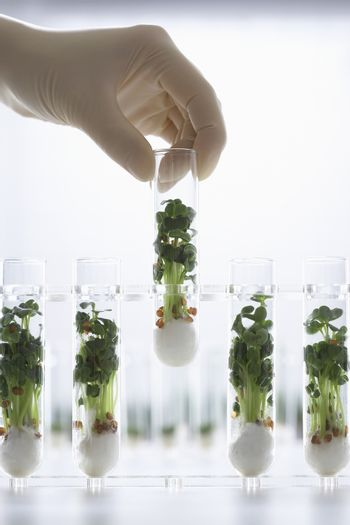 Closeup of a hand holding test tube containing cress seedlings against white background