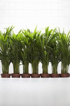 Plants growing side by side
