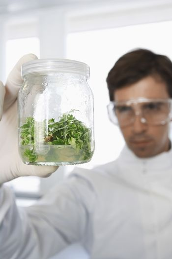 Male scientist examining glass jar of plant material