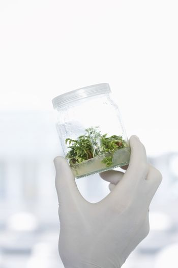 Closeup of scientist's hand holding jar of plant material