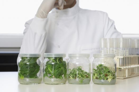 Scientist examining jars containing plant material on table in laboratory