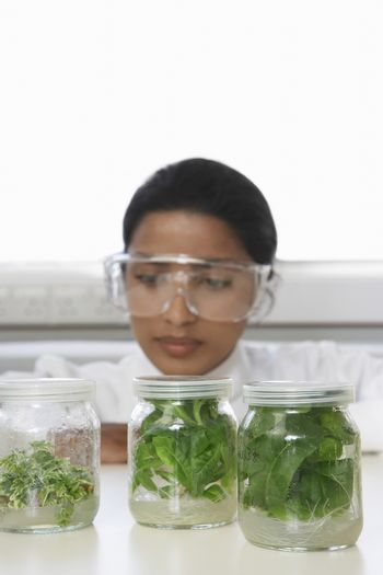 Female scientist examining jars containing plant material on table in laboratory