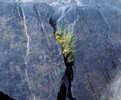 Grass growing from cleft in rock