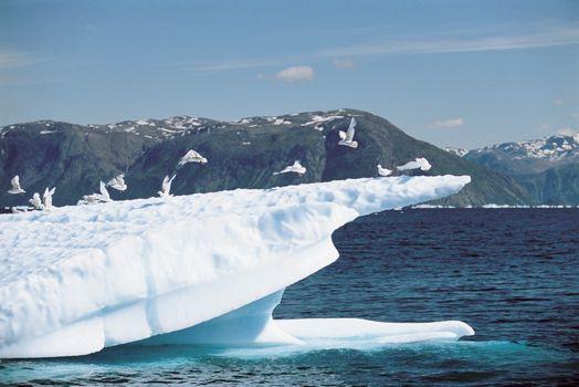 Group of birds landing on iceberg