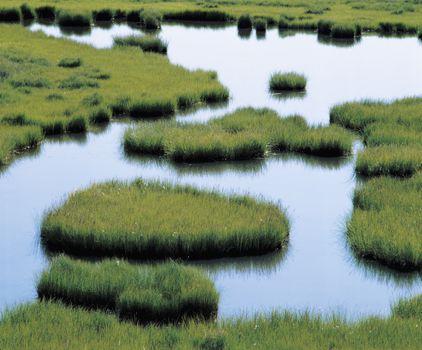 Pond in grassland