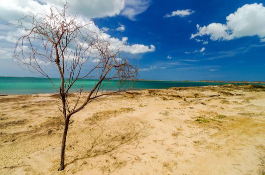 Dead tree on a deserted Caribbean beach in La Guajira, Colombia