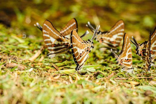 Butterfly eating salt marsh.
