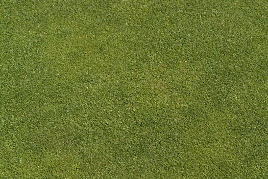 abstract golf green detail