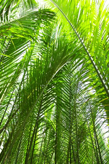 Nypa palm, and nypa palm leave can use for roof cover.