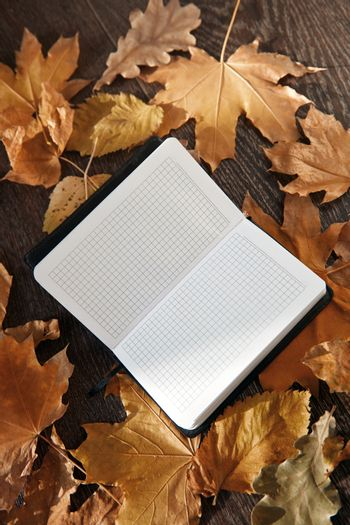 Close-up view on a blank notepad with autumn leaves