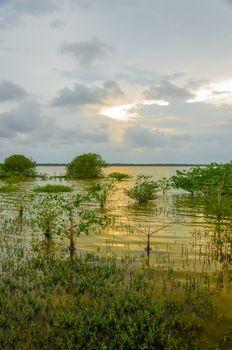 Sunset of a wetland lagoon in La Guajira, Colombia