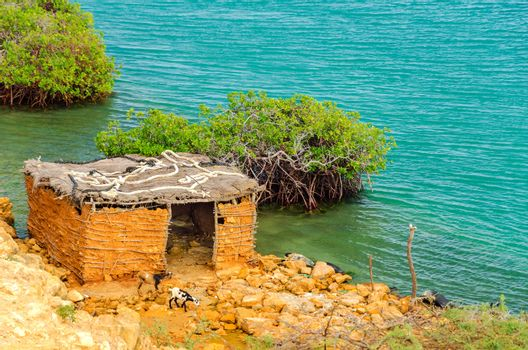 Two goats in front of a small mud shack near Punta Gallinas in La Guajira, Colombia