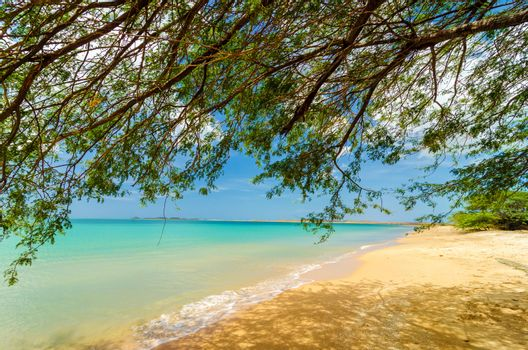 Low hanging branches of a tree on a Caribbean beach in La Guajira, Colombia