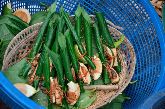 Areca nut, betel nut chewed with the leaf is mild stimulant for sell
