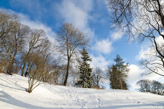 Winter landscape in the park. Sunny Day