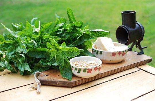 preparing pesto with fresh basil