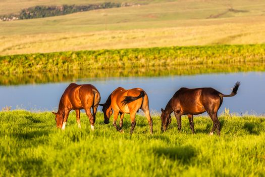 Horse Ponies Summer Pastures