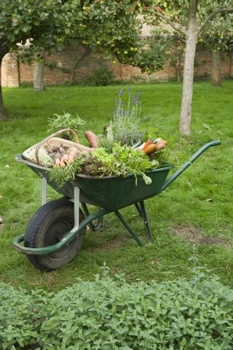 Closeup of a wheelbarrow full of vegetables on grass