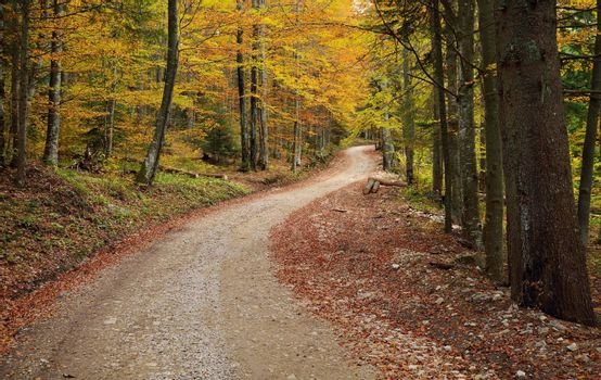 Road in Colorful Forest