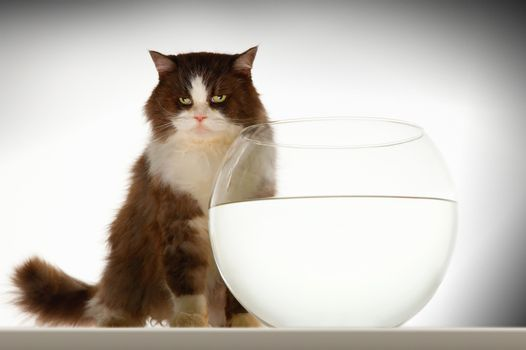 Cat sitting by empty fishbowl against white background