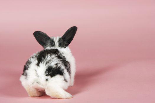Pet Rabbit On Pink Background