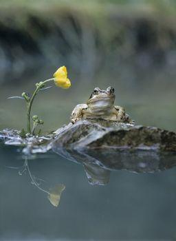 Frog sitting on rock