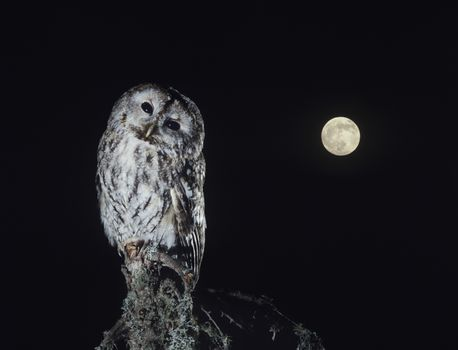 Owl perching on tree