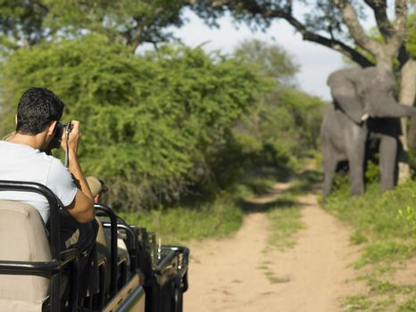 Rear view of a man on safari taking photograph of elephant