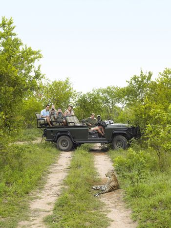 Tourists in jeep looking at cheetah lying on dirt road